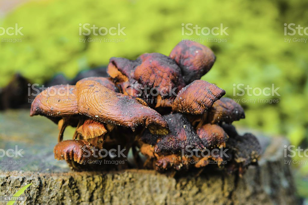 Egzotic Pilzen Lizenzfreies stock-foto