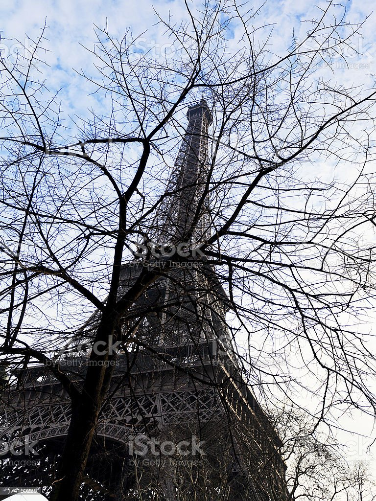 eiffel tower and tree branches in Paris royalty-free stock photo