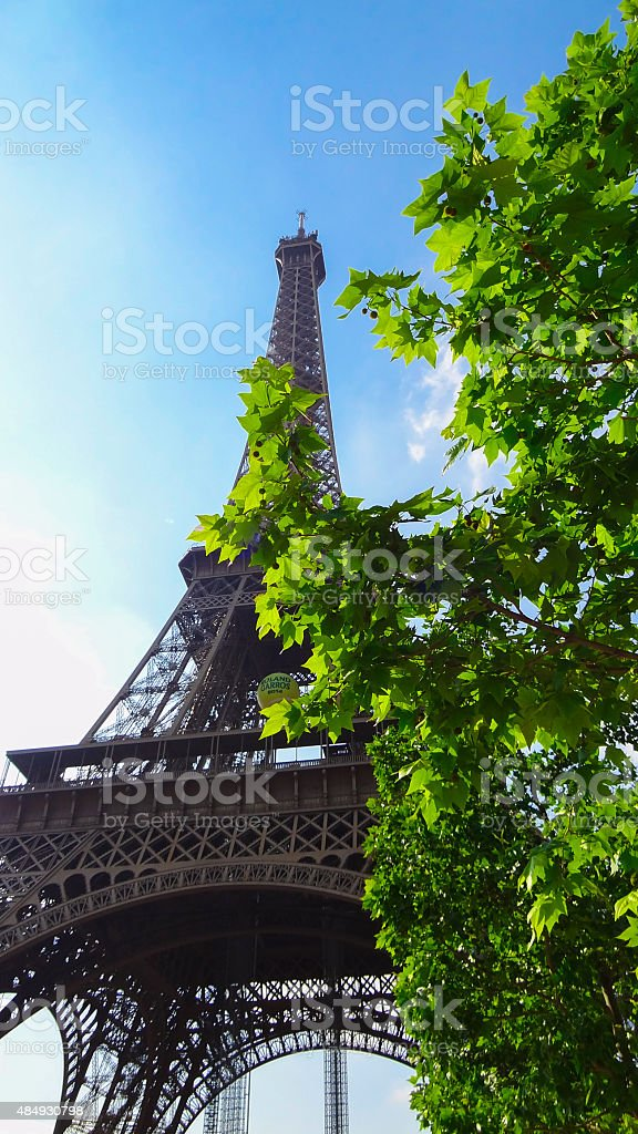 Eiffel Tower of Paris hidden behind a flourishing maple tree stock photo