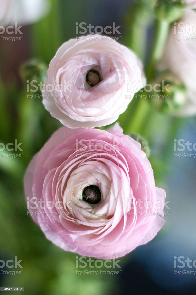 Eight by flowers stock photo