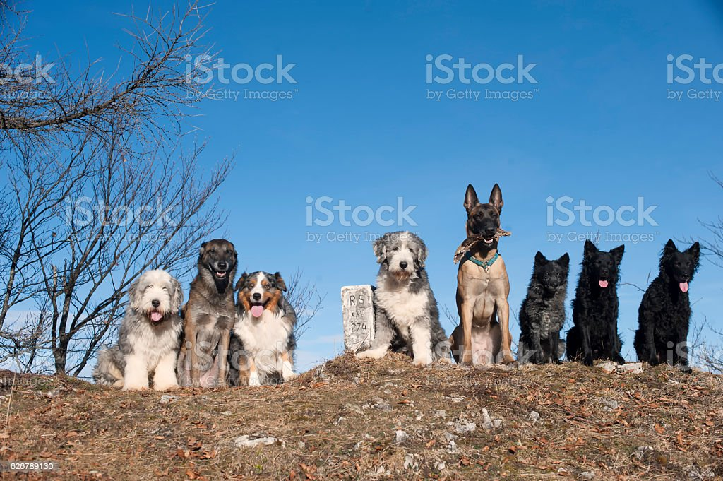 Eight dogs stock photo