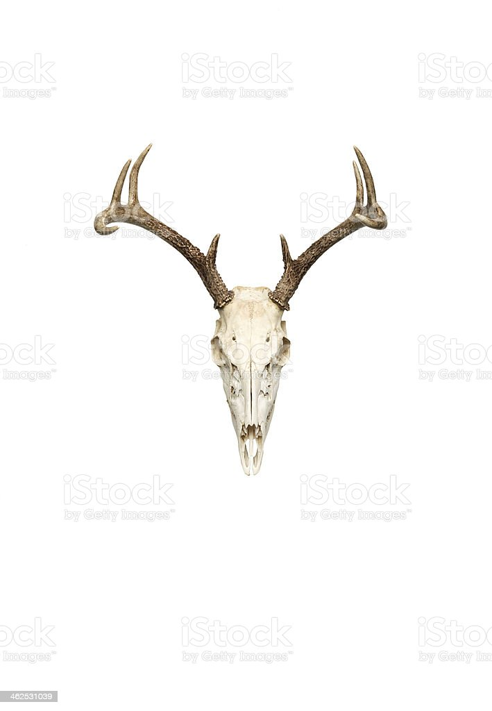 eight point stock photo