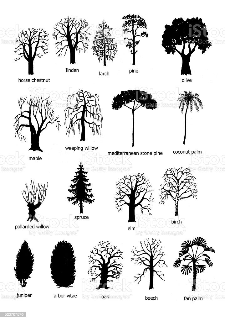 Eighteen types of trees stock photo