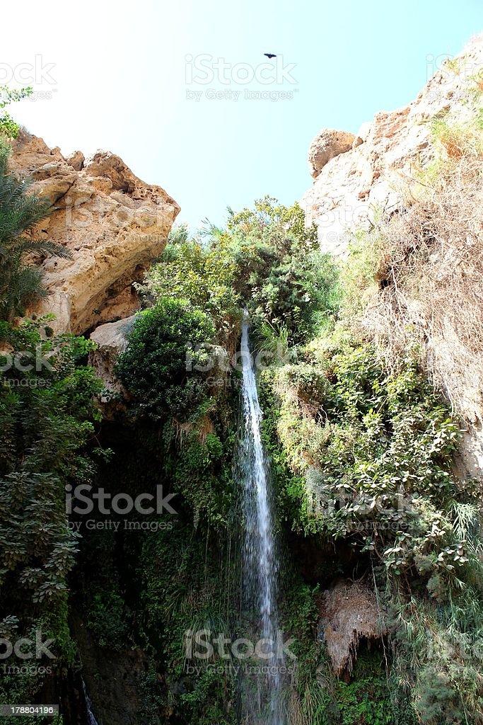 Ein Gedi, Israel royalty-free stock photo