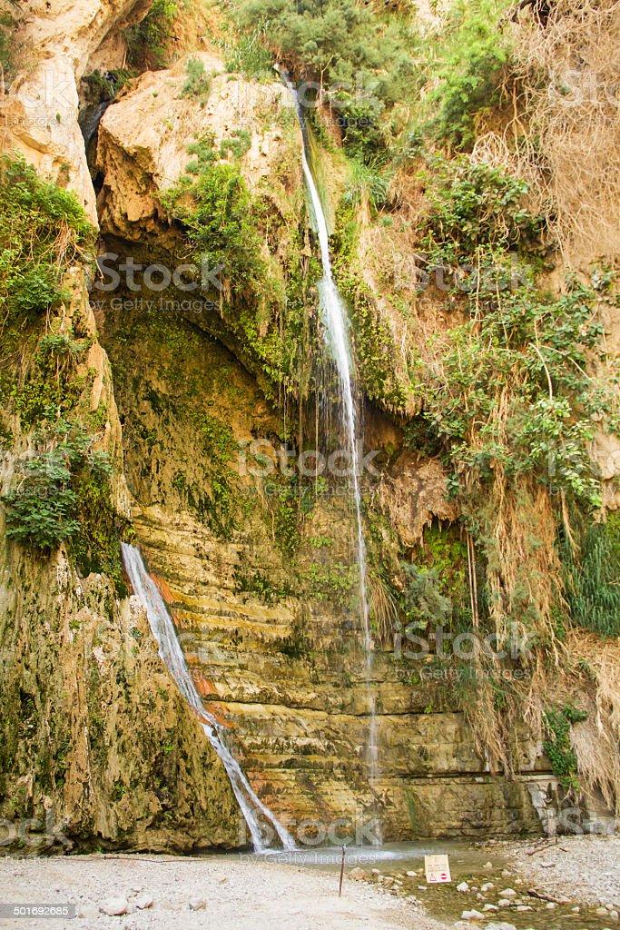 Ein Gedi spring, Israel. stock photo