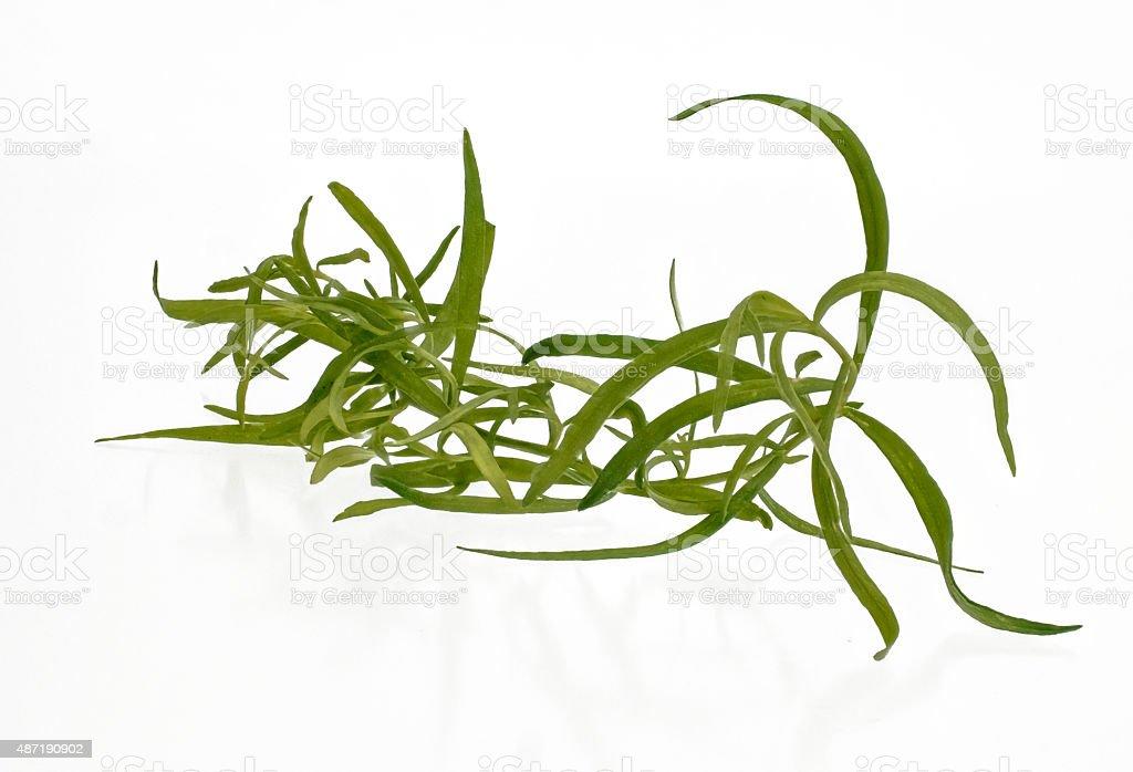 ein Zweig frischer Estragon stock photo