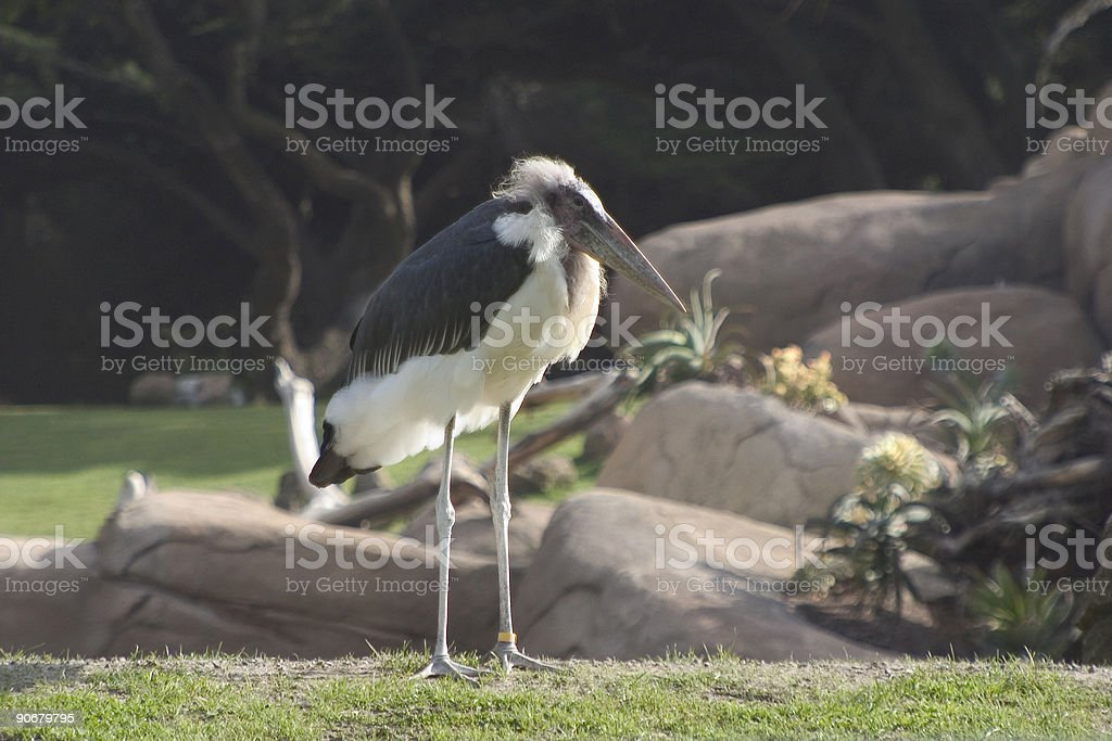 Einstien Bird royalty-free stock photo