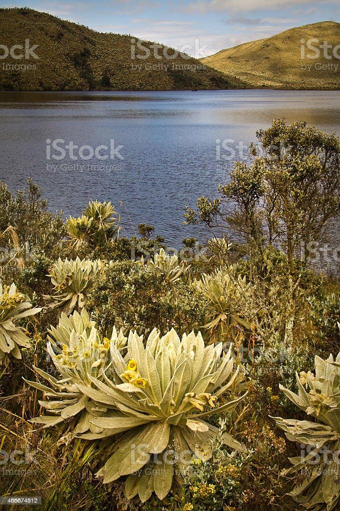 El Angel, ecological reserve, Carchi, Ecuador stock photo