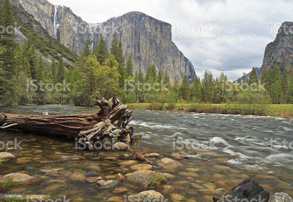 El Capitan and Merced River Cedar stock photo