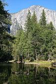 El Capitan over Trees - Yosemite Valley
