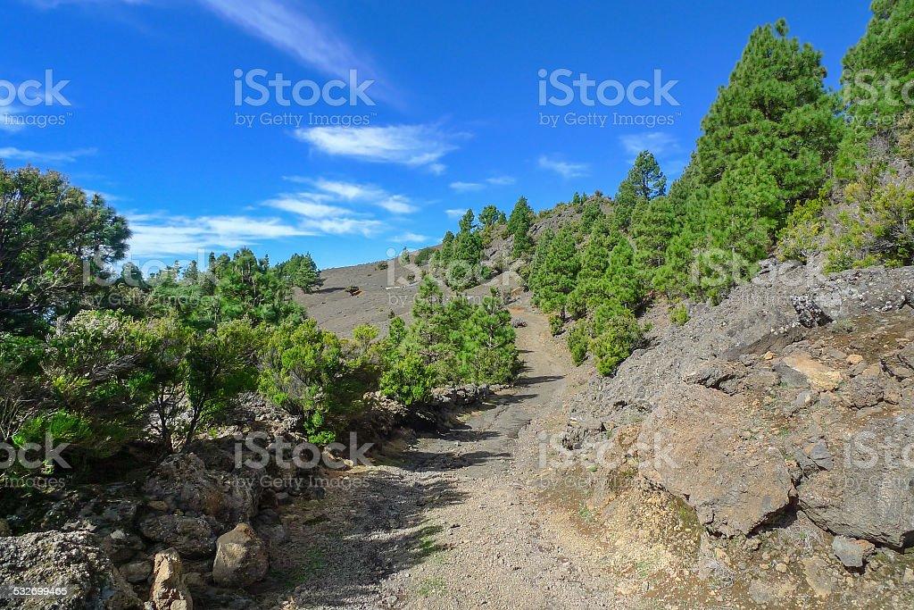 El Hierro - Canary Island pines royalty-free stock photo