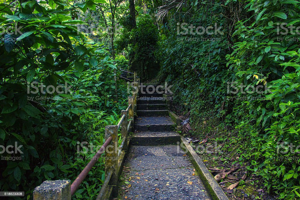 El Yunque National Forest stock photo