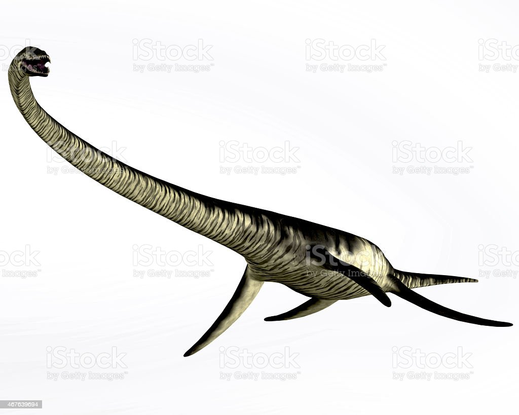 Elasmosaurus Reptile on White vector art illustration