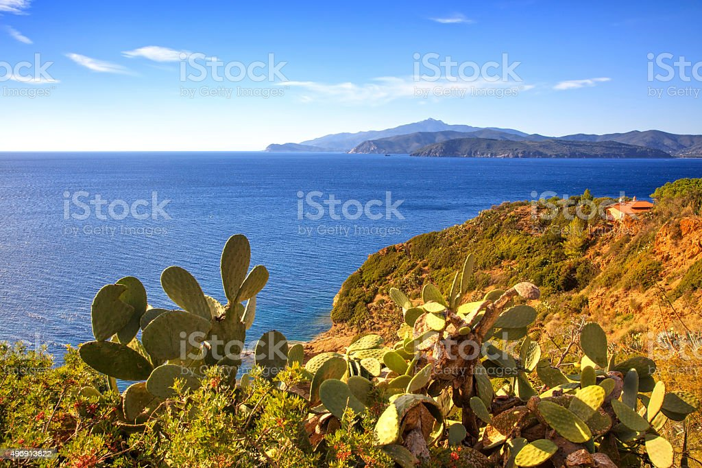 Elba island, cactus indian fig opuntia, coast view Capoliveri Tu stock photo