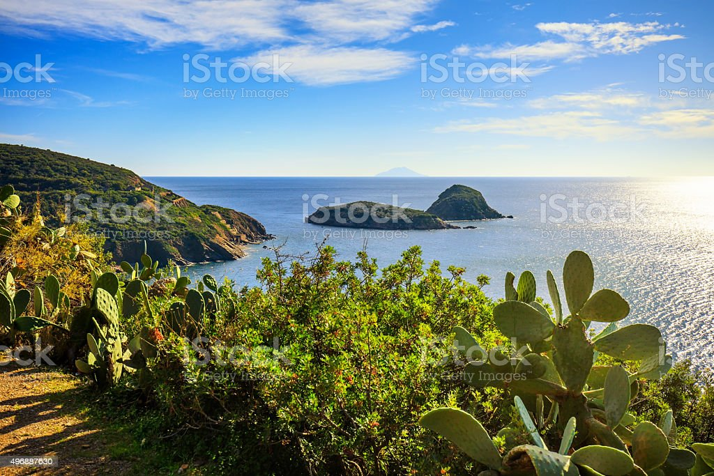 Elba island, cactus indian fig opuntia, Innamorata Beach view Ca stock photo