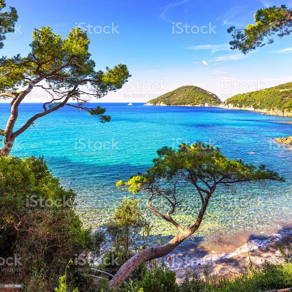 Elba island sea, Portoferraio Viticcio beach coast and trees. Tu stock photo