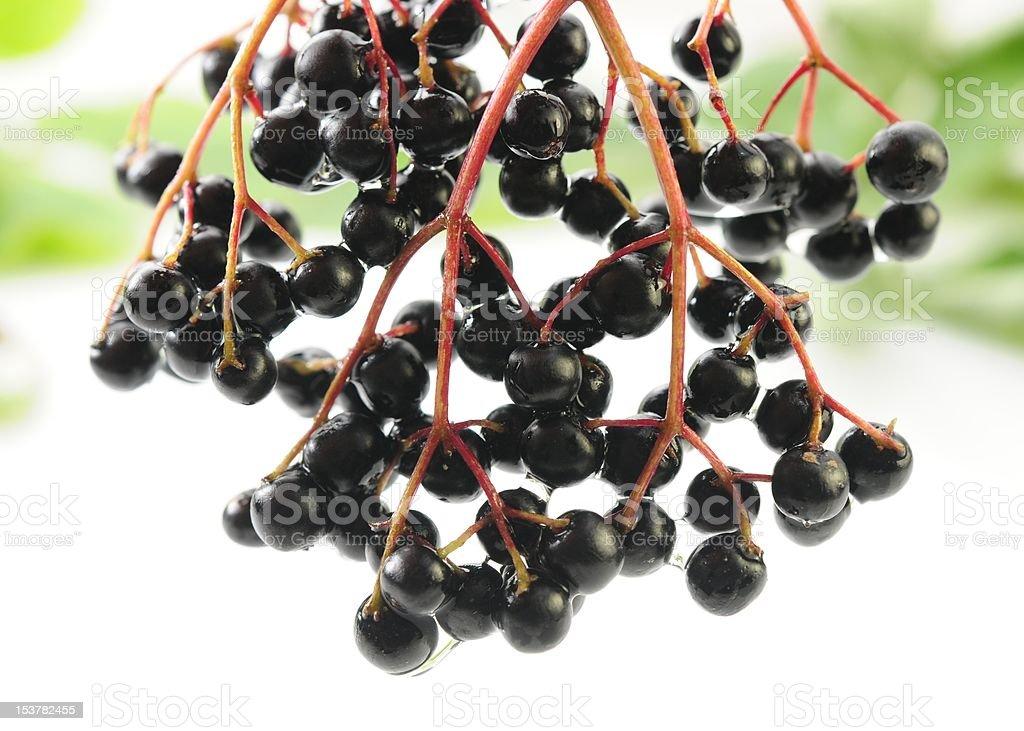 Elderberries royalty-free stock photo