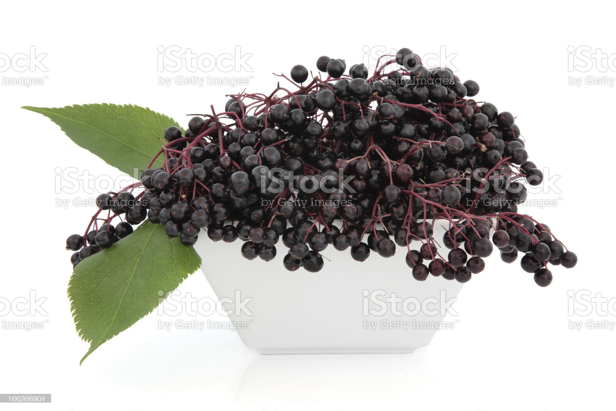 Elderberry Fruit royalty-free stock photo