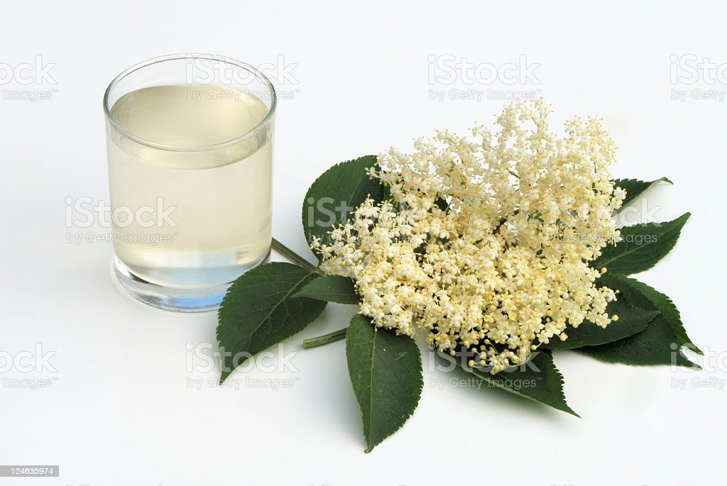 Elderflower cordial drink from elder tree flower stock photo