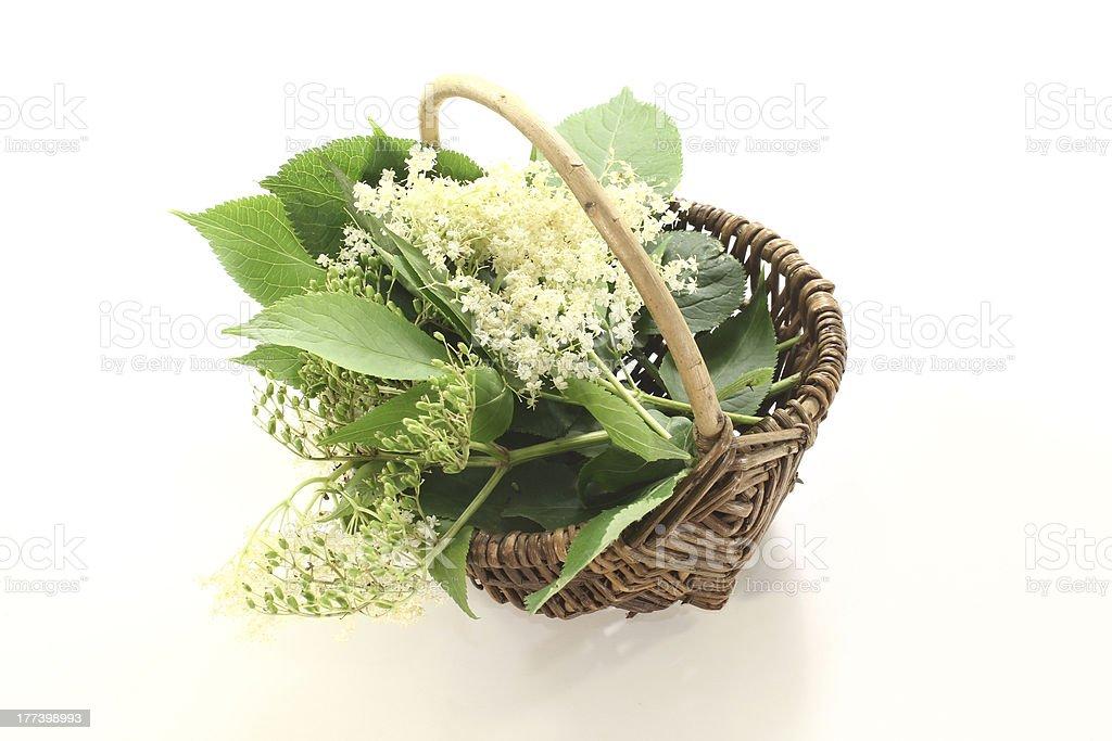 elderflowers in a basket royalty-free stock photo