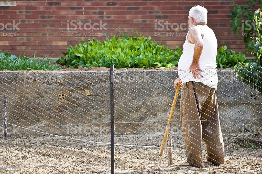 Elderly Farmer  in a Field. Color Image stock photo