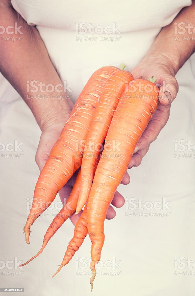 Elderly hands holding organic fresh carots with vintage style stock photo