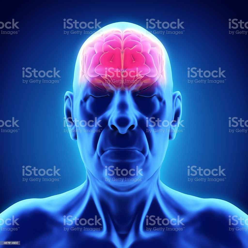 Elderly Male Brain Anatomy stock photo