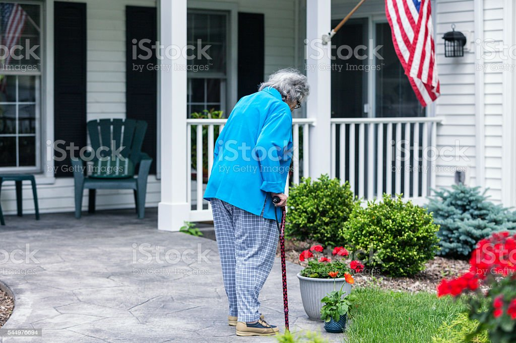 Elderly Patriotic Woman With Cane Looking Down At Geranium Flowers stock photo