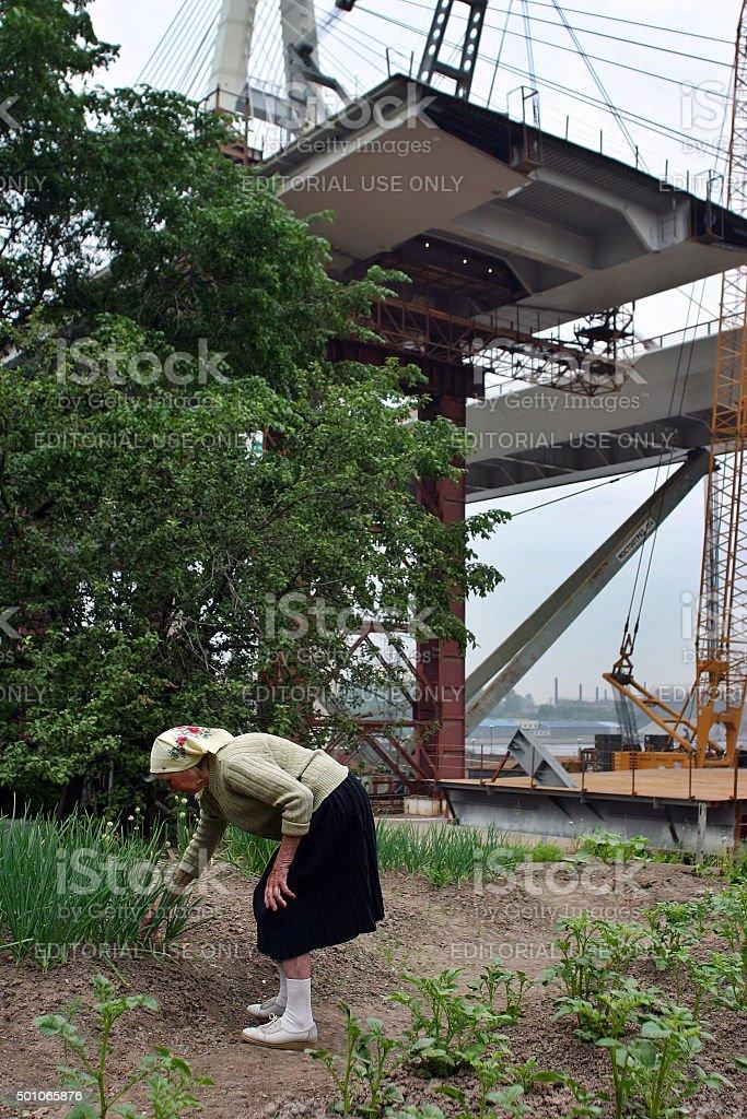 elderly woman farmer inspects plants planted in field, over bridge stock photo