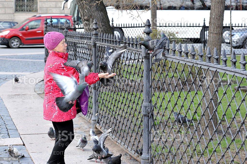 elderly woman feeds pigeons stock photo