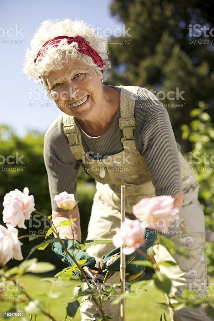 Elderly woman gardening in backyard stock photo