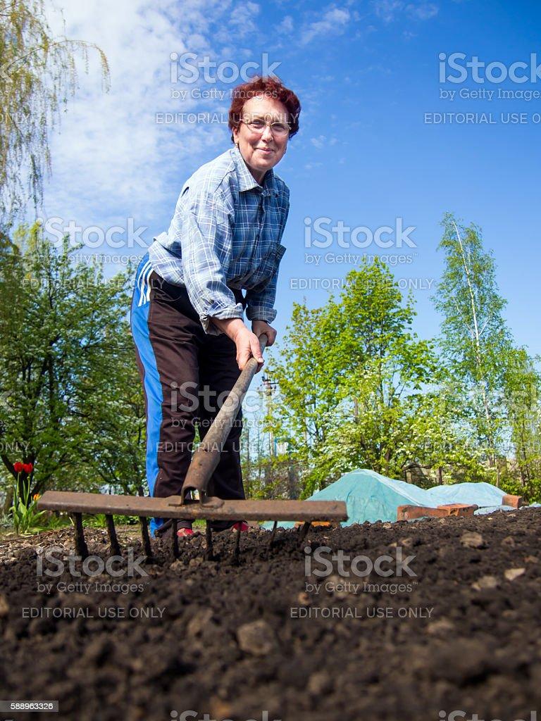 Elderly woman loose soil rake in his a personal plot stock photo