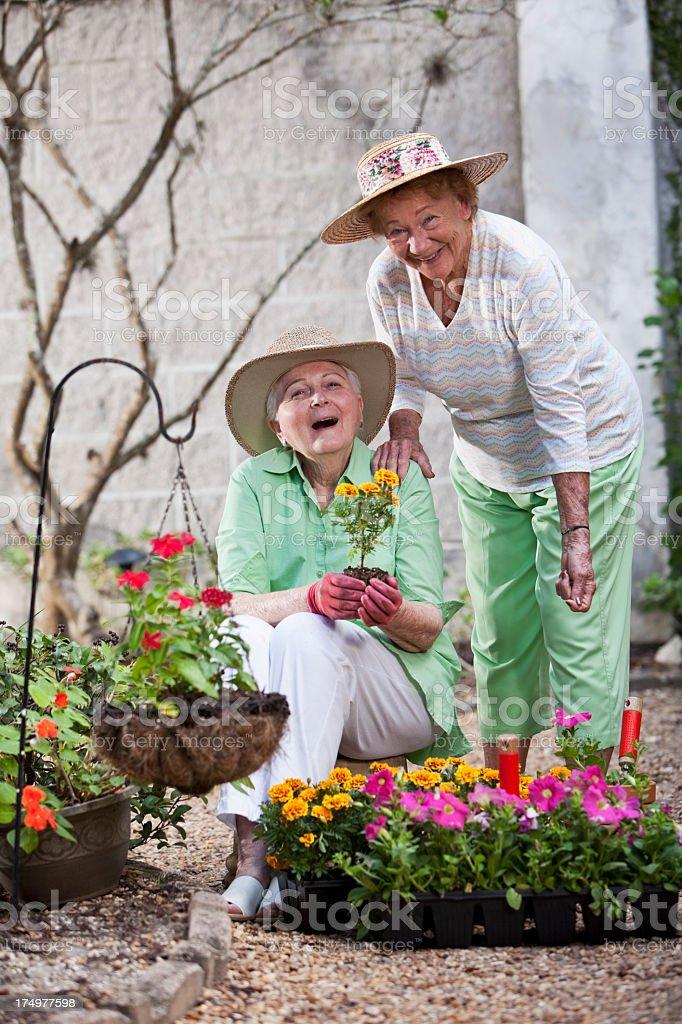 Elderly women gardening royalty-free stock photo