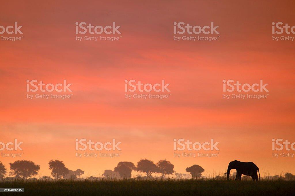 Ele sunset stock photo
