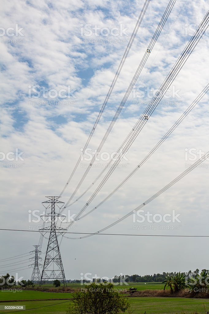 electric pole and rice field stock photo