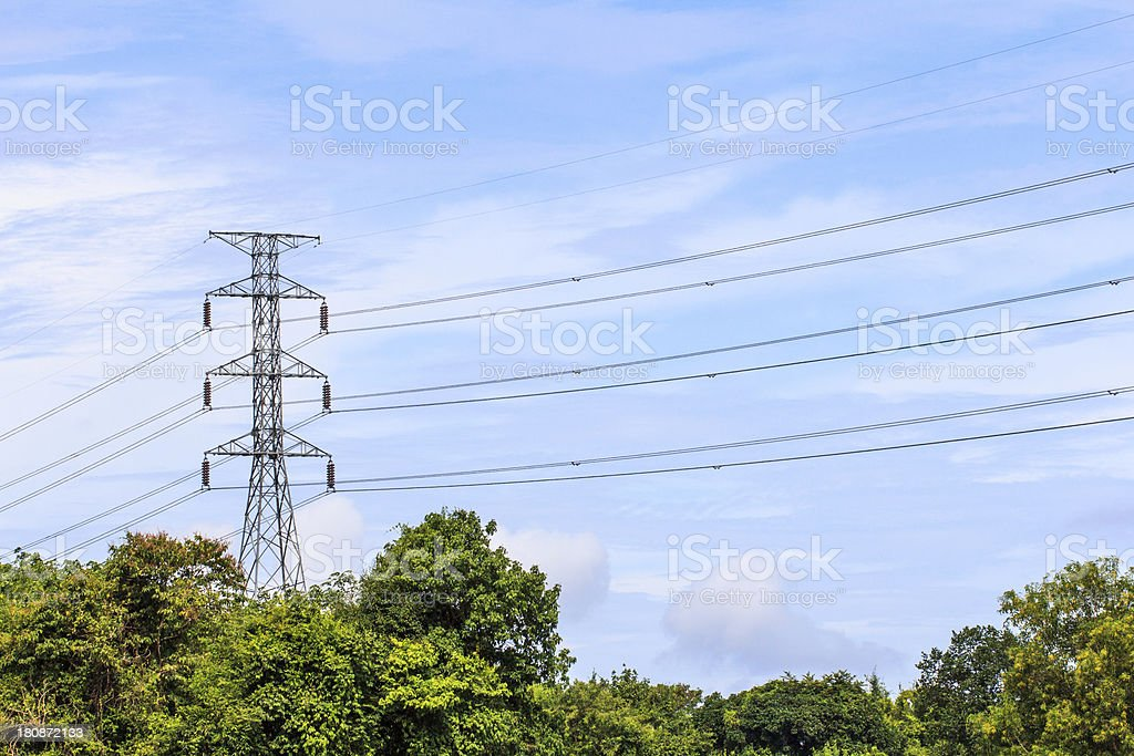 Electric pole with wild rubber royalty-free stock photo