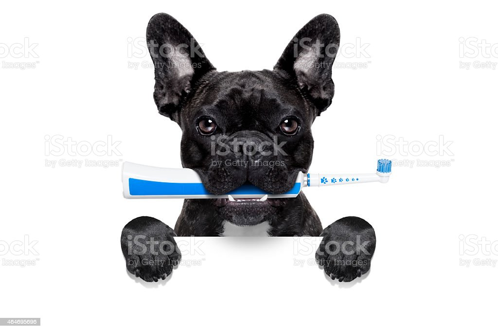electric toothbrush dog stock photo