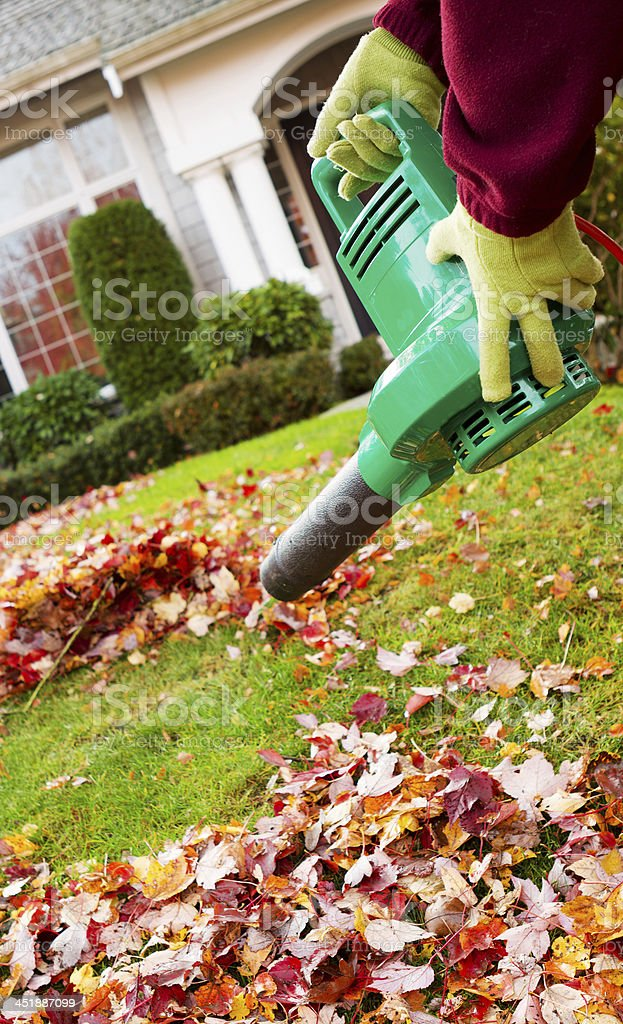 Electrical Blower Cleaning Leaves from Front Yard during Autumn stock photo