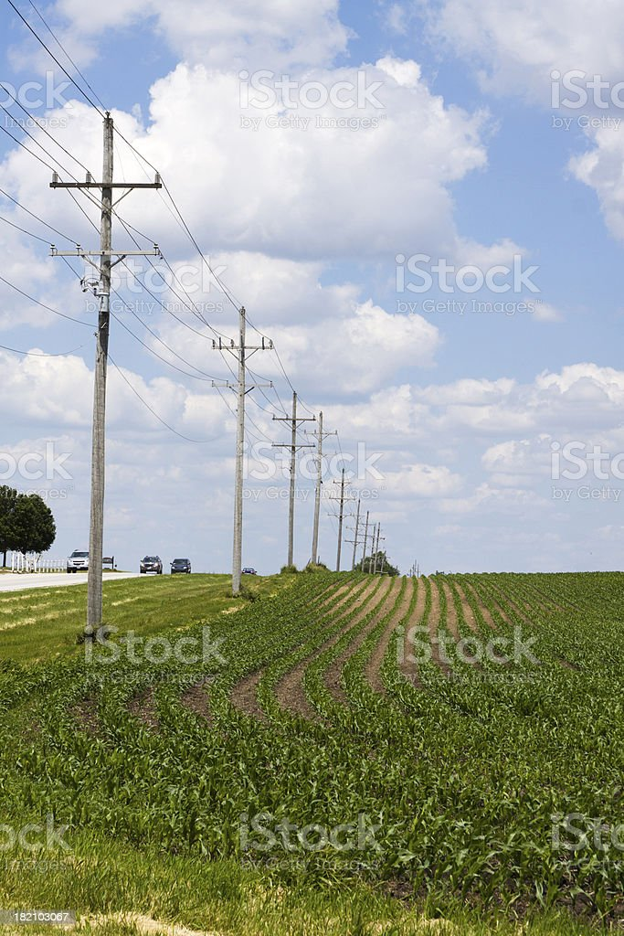 Electrical Posts on Farm by Road royalty-free stock photo