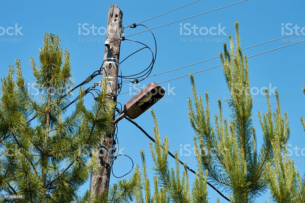 electricity pole in the spruces stock photo