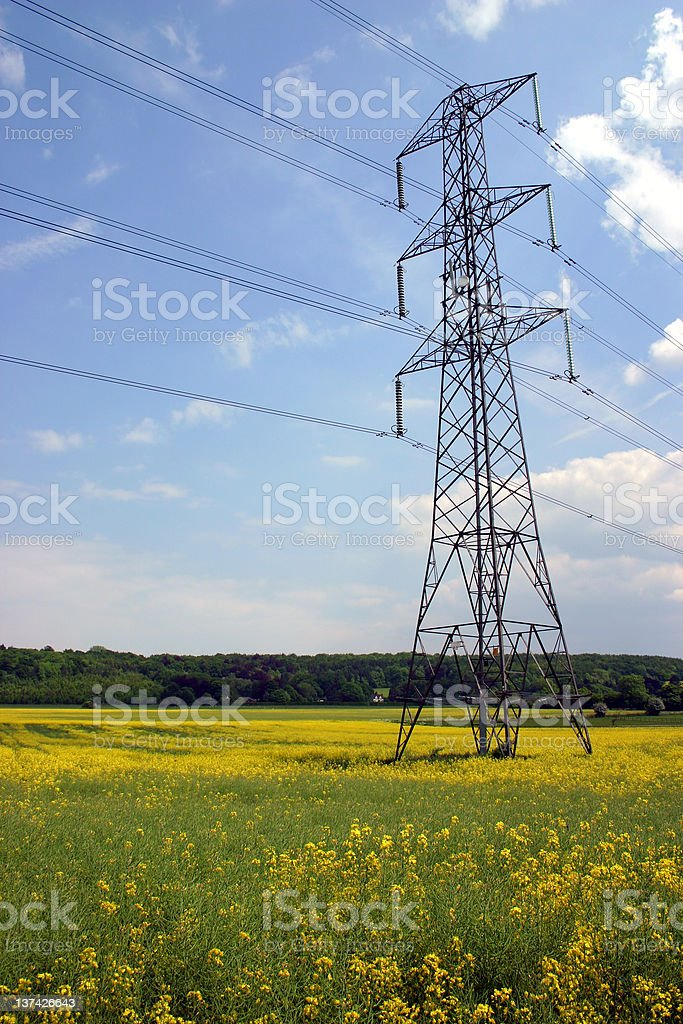 Electricity Pylon In Rapeseed Field royalty-free stock photo