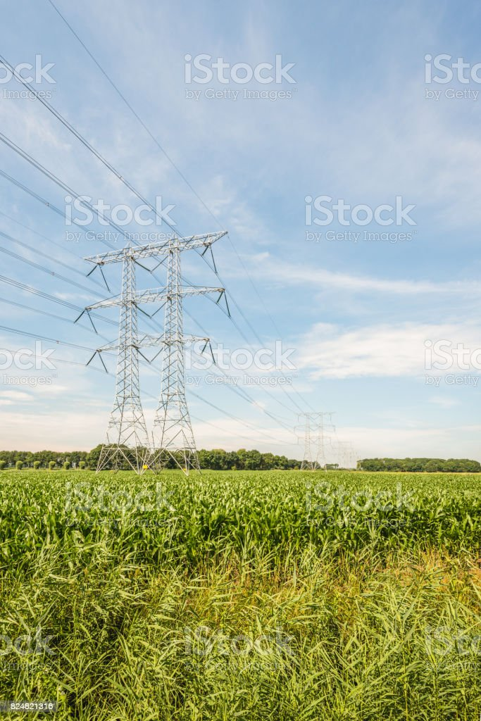 Electricity pylons and cables in an agricultural landscape with silage maize cultivation stock photo