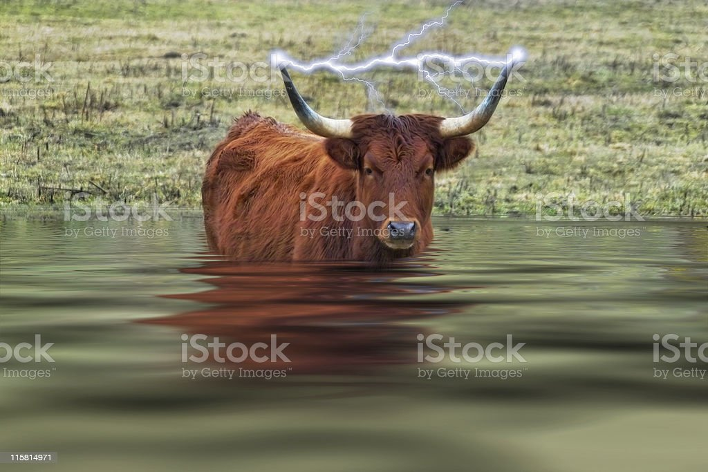 Electro Bull in Deep Water royalty-free stock photo