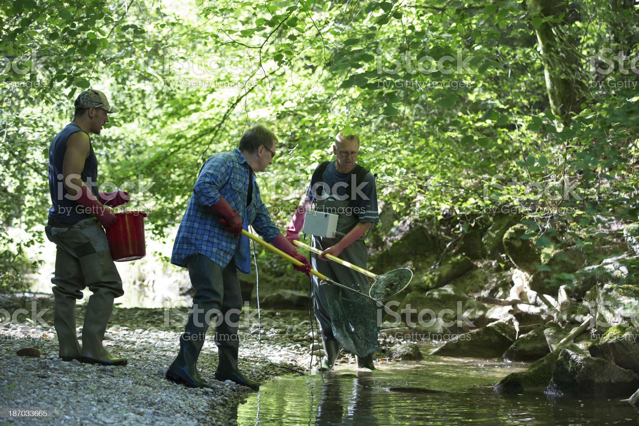 electrofishing royalty-free stock photo