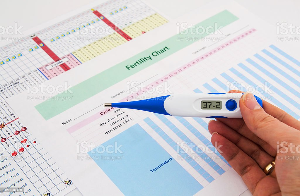 Electronic thermometer in woman hand. Fertility concept stock photo