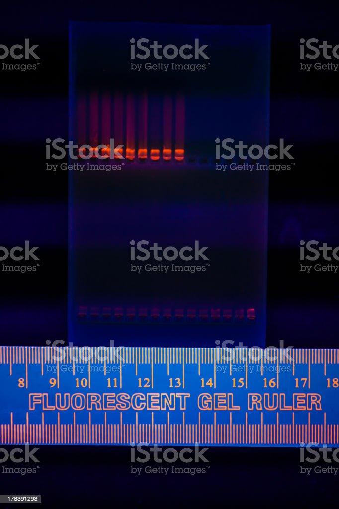 Electrophoregram of DNA separation stock photo