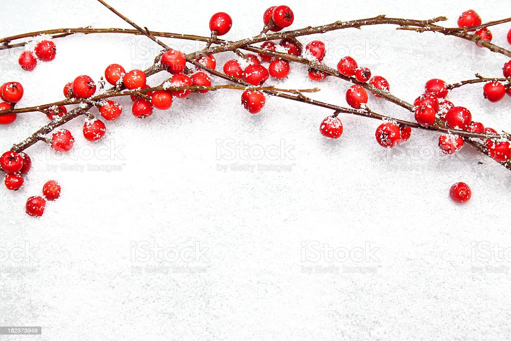 Elefanckie Christmas branches with red berries on snow stock photo