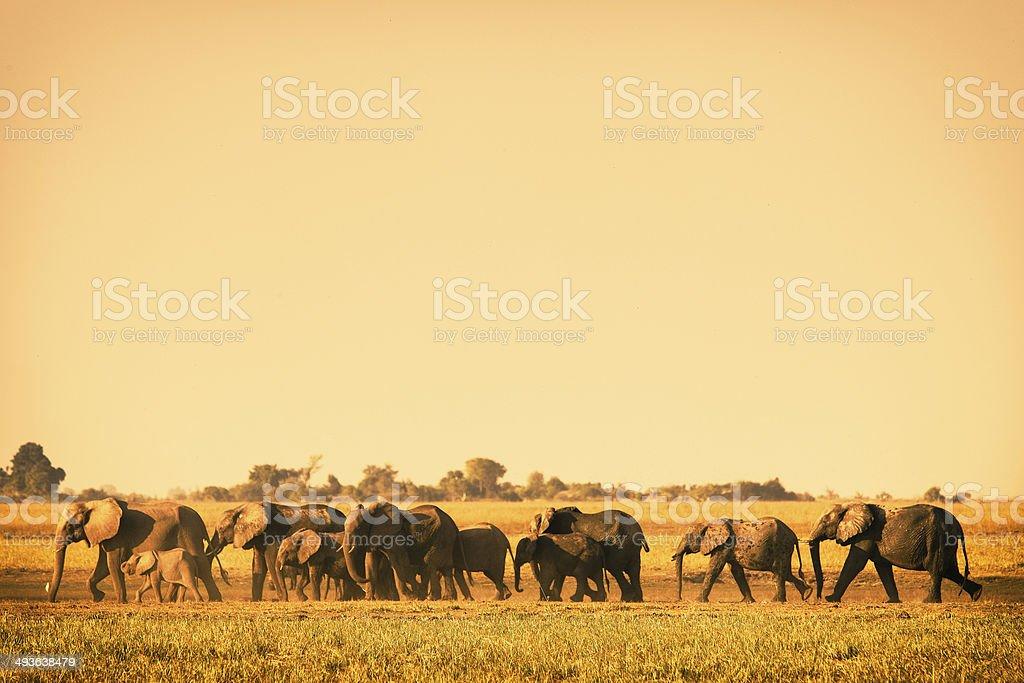 Elefant stock photo