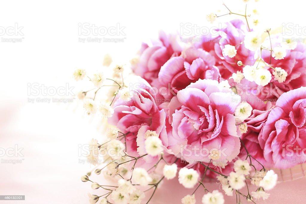 elegant bicolor carnation stock photo