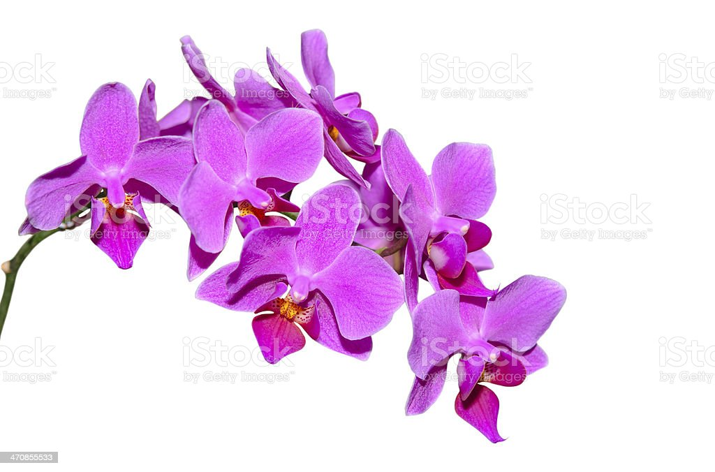 Elegant branch of exotic flowers with purple petals stock photo